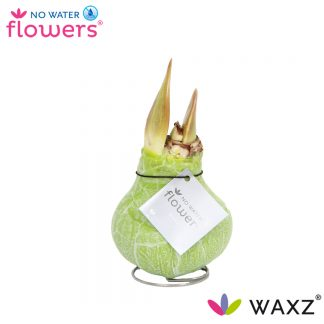 Waxz Marmer