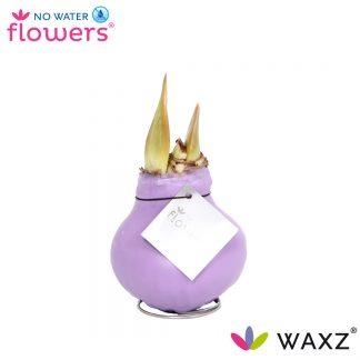 Waxz Pastel