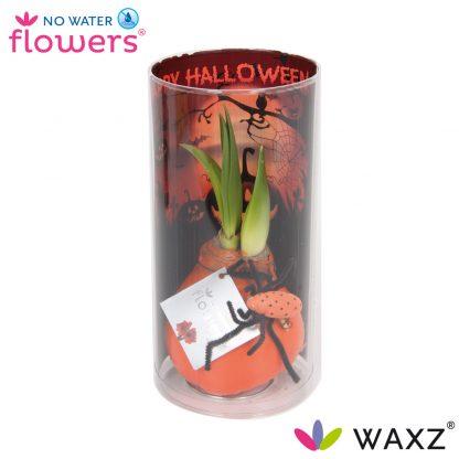 No water flowers halloween met oranje wax laag in koker