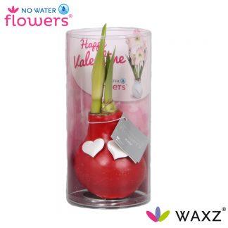 No Water Flowers® Valentijn rood met hartjes in koker