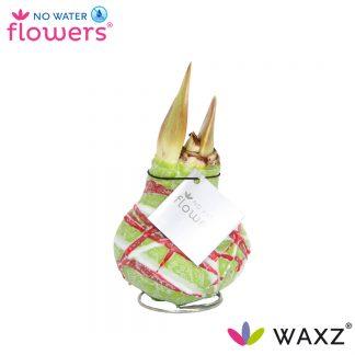 Waxz Art
