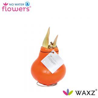 Waxz Kleur