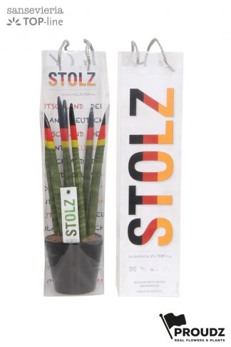 Sansevieria 8,5cm Proudz Germany (stolz) in bag front and back