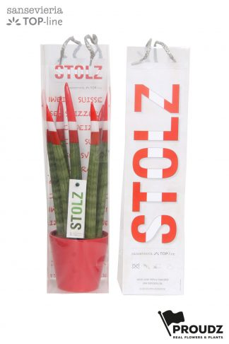 Sansevieria 8,5cm Proudz Switserland (stolz) in bag front and back