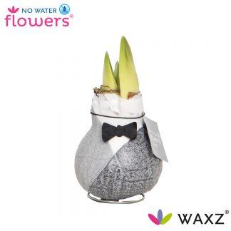Waxz Giletz