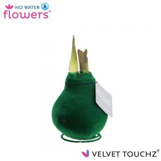 Velvet Touchz NWF